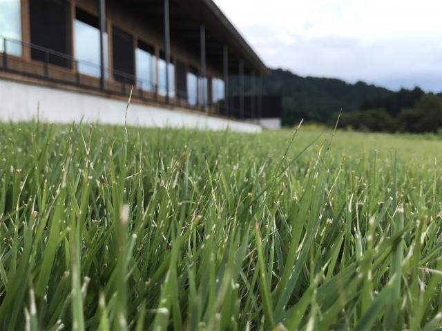 隣の芝は青い