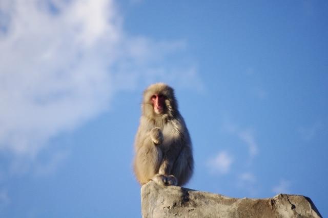 孤独にたたずむ猿